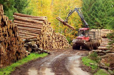 Sektor lesného hospodárstva a spracovania dreva na online rokovaní